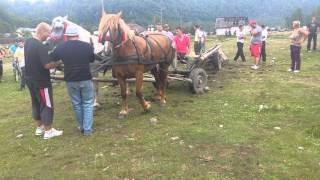 getlinkyoutube.com-Proba marina Berevoesti 2014 iapa lui Alexandru Dilirici si calul lui Victor Moldoveanu