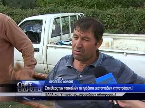ΦΟΛΟΗ ΚΑΤΑΓΓΕΛΙΕΣ ΤΣΑΚΑΛΙΑ