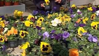getlinkyoutube.com-Flores de invierno