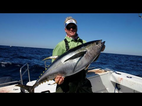Relentless Fog - YELLOWFIN TUNA on D.O.A. lures