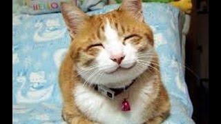 getlinkyoutube.com-Топ 10 самых смешных котов