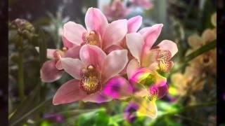 getlinkyoutube.com-ดอกไม้ให้คุณ - นันทิดา แก้วบัวสาย