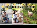 2019 Adorable Golden Retriever Playing Compilation