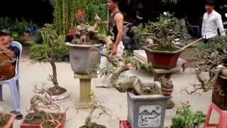 getlinkyoutube.com-bonsai market -cho cay canh Ha Dong