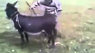 getlinkyoutube.com-Un burro con motor