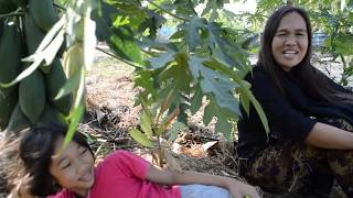 getlinkyoutube.com-สวนเกษตร - ปลูกกล้วยได้พริก มะละกอ ข่าอ่อน