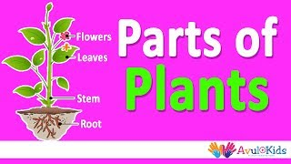 Parts of plants | Roots, Stem, Leaves, Flowers