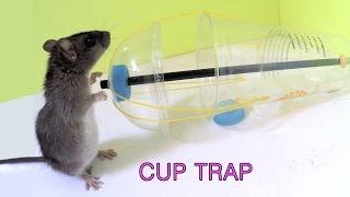 getlinkyoutube.com-Disposable cup rat/mouse trap