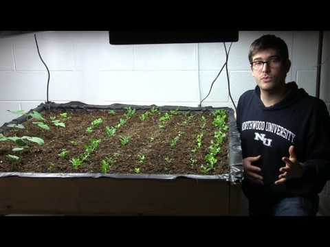 Indoor Gardening: Watering, How to Tell if You Are Overwatering