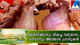 getlinkyoutube.com-An interesting and profitable Fancy Pigeon farming  | Manorama News