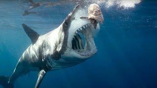 getlinkyoutube.com-Okyanusların En Büyüğü MEGALODON Köpek Balığı