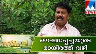 Medicinal plants in Rayirath | Manorama News | Nattupacha
