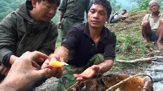 getlinkyoutube.com-Hallucinogen Honey Hunters - Hunting mad honey - documentary
