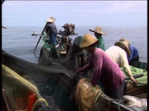 Fishing Adventures in Malaysia Documentary