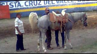 getlinkyoutube.com-caballo tripa colgada