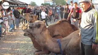 getlinkyoutube.com-► تصوير من داخل تظاهرة عيد الكبش بـ مدينة  #اولاد_جلال #بسكرة