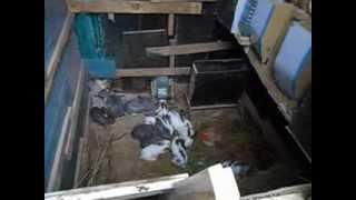 getlinkyoutube.com-Разведение кроликов в яме.
