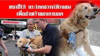 หมาฮีโร่! กระโดดขวางให้รถชน เพื่อช่วยเจ้าของตาบอด #สดใหม่ไทยแลนด์ ช่อง2