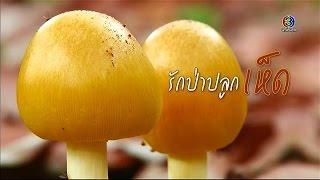 getlinkyoutube.com-ทุ่งแสงตะวัน | ตอน รักป่าปลูกเห็ด | 26-09-58 | TV3 Official