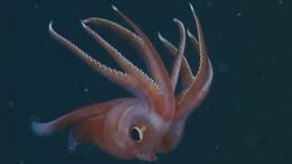 getlinkyoutube.com-Crazy Deep Water Animals I Verrückte Unterwasser-Tiere der Tiefsee
