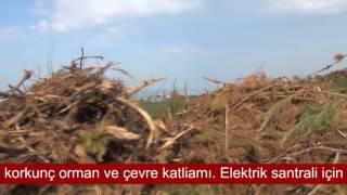 Kocaeli Kandıra Kefken Babalı sahillerinde çevre ve orman katliamı