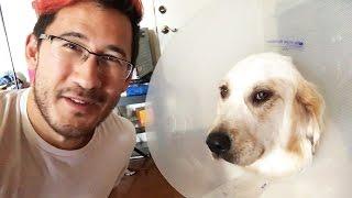 getlinkyoutube.com-Chica Had Surgery