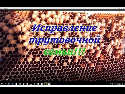 Один из способов исправление трутовочной семьи весной от А до Я, для начинающих. Beekeeping.