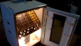 getlinkyoutube.com-Inkubator automatyczny do wylęgu jaj - domowej roboty