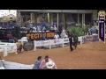 spectrum international paso fino horse show 2017