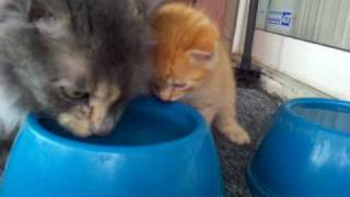 getlinkyoutube.com-Cutest kitten moment ever caught on camera!!!