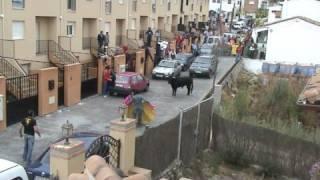 getlinkyoutube.com-Que se ha escapado un toro !!!!!!!!!!!!!!!!! (II PARTE)