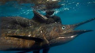 getlinkyoutube.com-Full Circle, Spearfishing Nicaragua