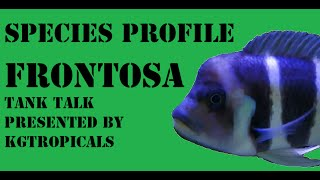 getlinkyoutube.com-Species Profile Cyphotilapia Frontosa. Tank Talk Presented by KGTropicals