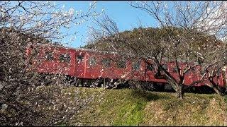 キハ28&首都圏色のキハ52に会う旅 ~梅咲きほころぶいすみ鉄道~ ・