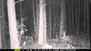 getlinkyoutube.com-Screaming banshee on trail camera