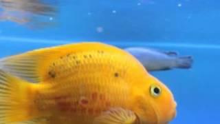 getlinkyoutube.com-ฝันเห็นปลา