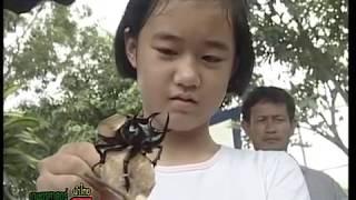 getlinkyoutube.com-ภูมิปัญญาแผ่นดิน แมลงกว่าง