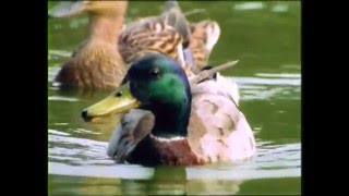 getlinkyoutube.com-Baby Einstein's Baby Dolittle - Neighborhood Animals Part 5