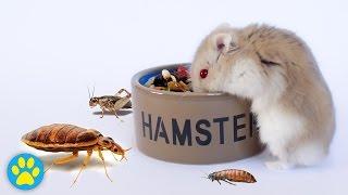 getlinkyoutube.com-Protecting Pet Food From Bugs