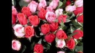getlinkyoutube.com-มีดอกไม้มาฝาก