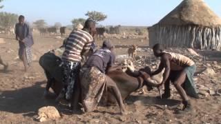 getlinkyoutube.com-NAMIBIA - Himba boys circumsision