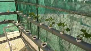 getlinkyoutube.com-الزراعة المائية بواسطة الاسماك