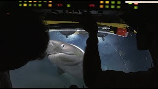 Sharks Attack Submarine | Blue Planet II Behind The Scenes width=