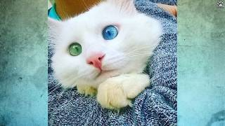 getlinkyoutube.com-10 Najpiękniejszych kotów świata | SpinkaFun