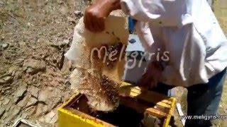"getlinkyoutube.com-Τρύγος μελιού & Συσκευασία  μελιού «Μελίγυρις» -  Harvest honey & honey Packaging "" Meligyris """