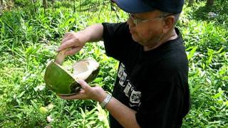 how to eat young green coconut