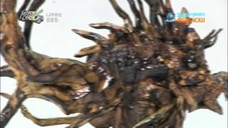 getlinkyoutube.com-SBS [세상에이런일이] - 뿌리공예 아저씨