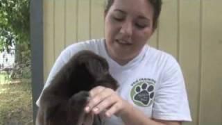 getlinkyoutube.com-How to Stop Puppy Play Biting