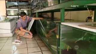 getlinkyoutube.com-Bisnis ikan hias dengan omzet ratusan juta - IMS