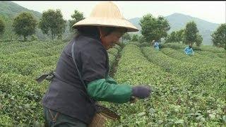 getlinkyoutube.com-دروس عن الأساليب الزراعية الحديثة.
